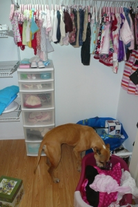 Her closet... Cairo sniffing out some poopey jammies- eww!